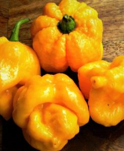 Hot Chili Pepper 7 Pot Yellow