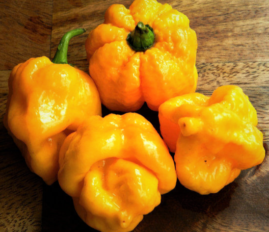 Hot Chili Pepper 7 Pot Yellow