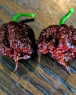 carolina-reaper-chocolate